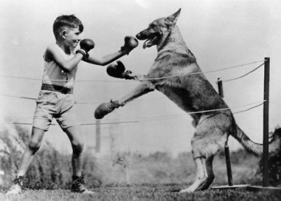 Crazy-Animals-from-Past-2