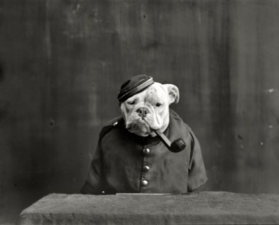 Crazy-Animals-from-Past-4