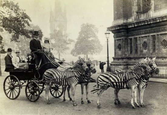 Crazy-Animals-from-Past-6