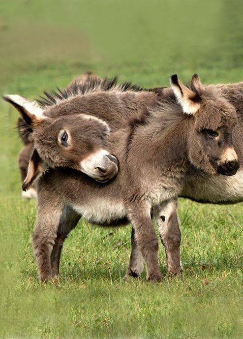 Donkeys are cute too, right