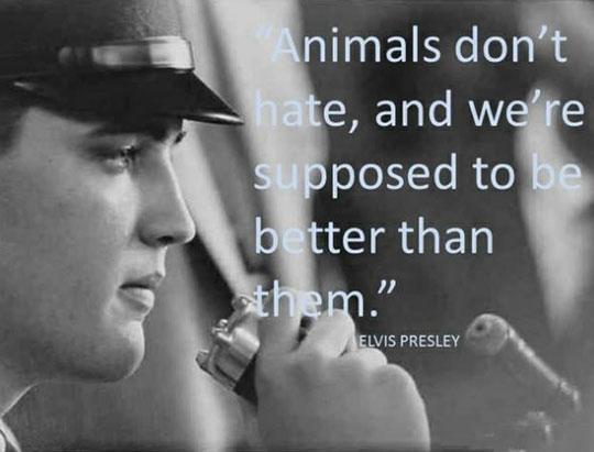 Elvis' Wise Words
