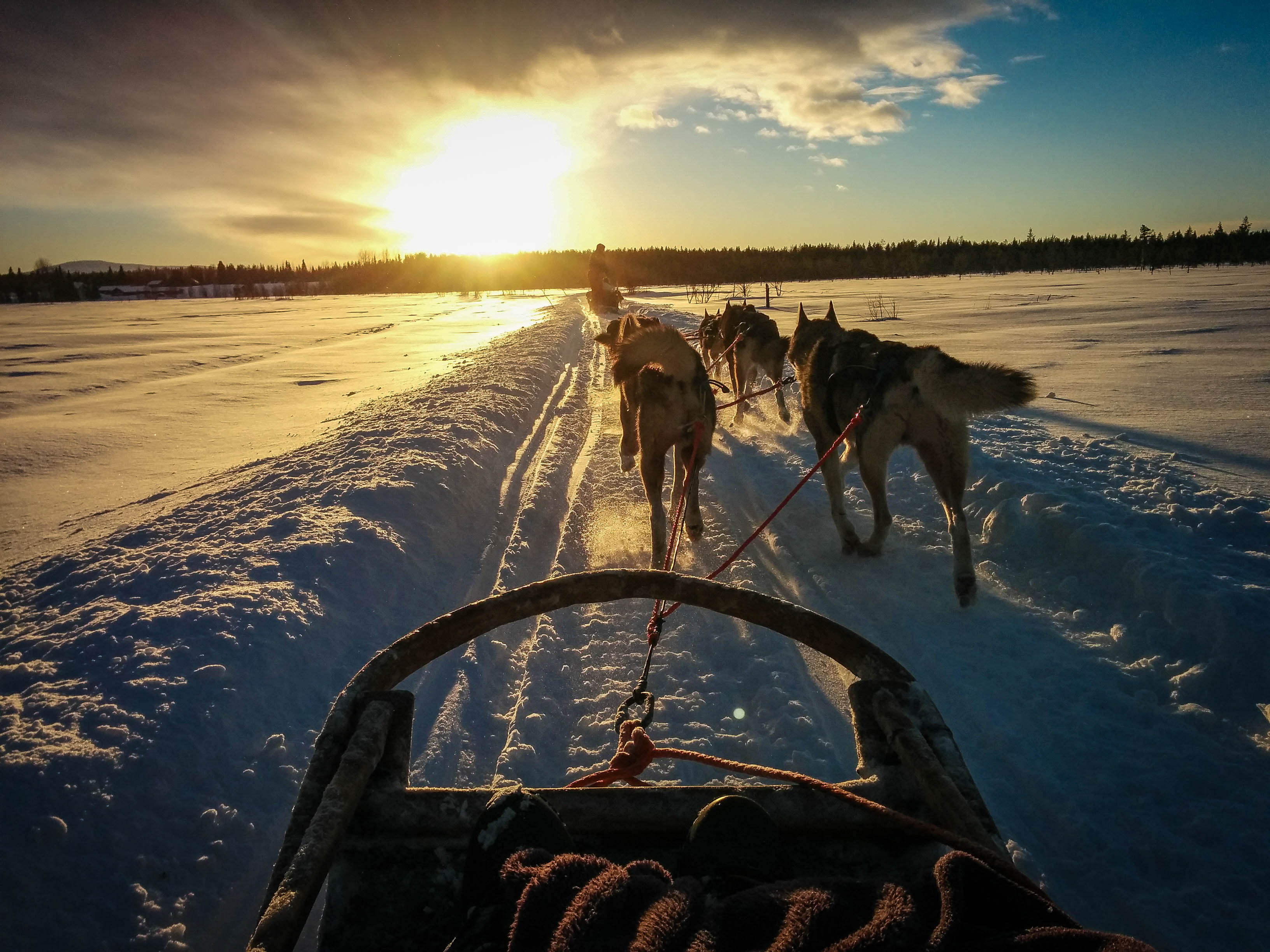 Husky ride through Lapland