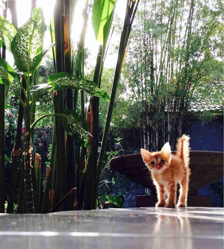 Meet Lucu, my Balinese street cat saved from the gutter