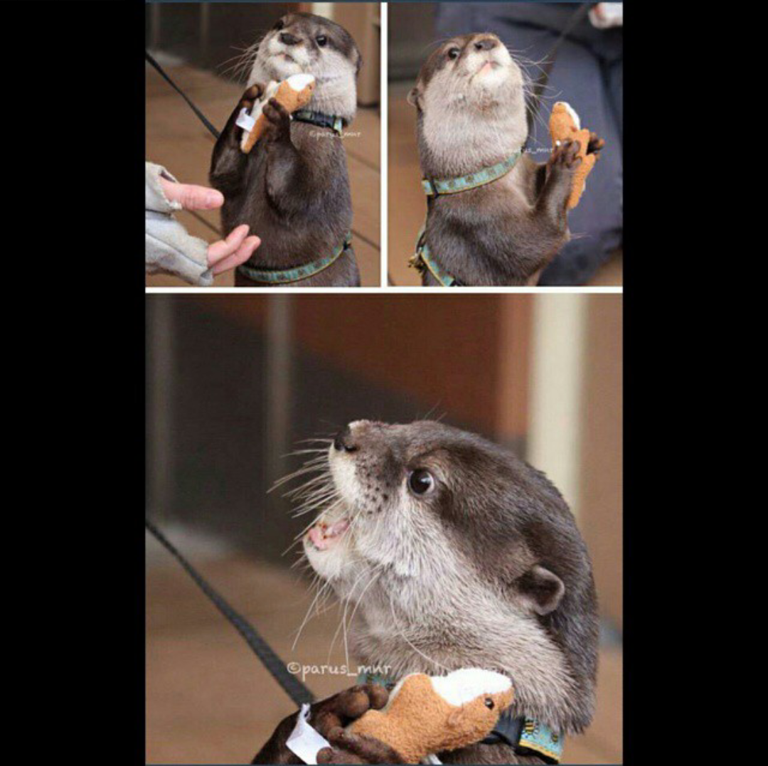 Otter with otter stuffed animal