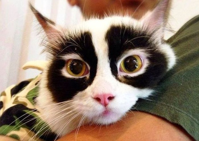 This cat must have a secret identity