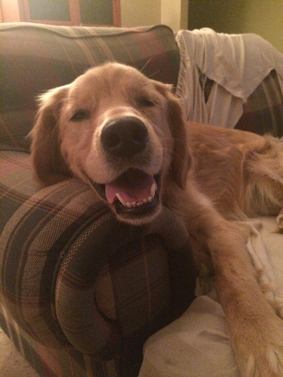 This is Cooper and he's happy to see you!
