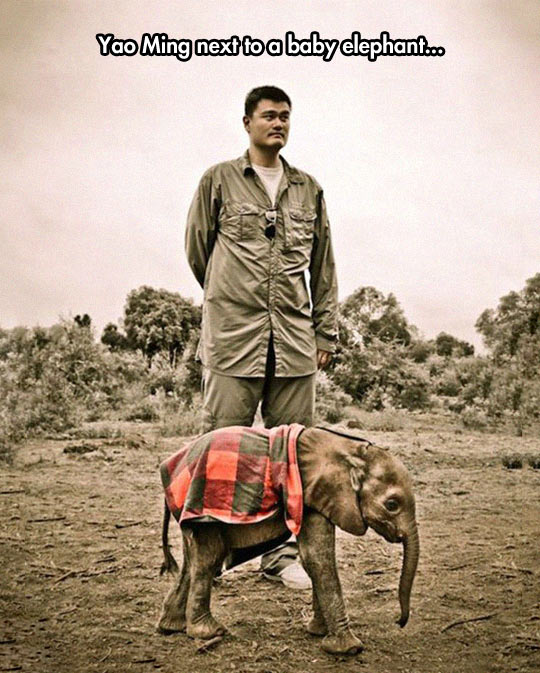 Yao Ming For Scale