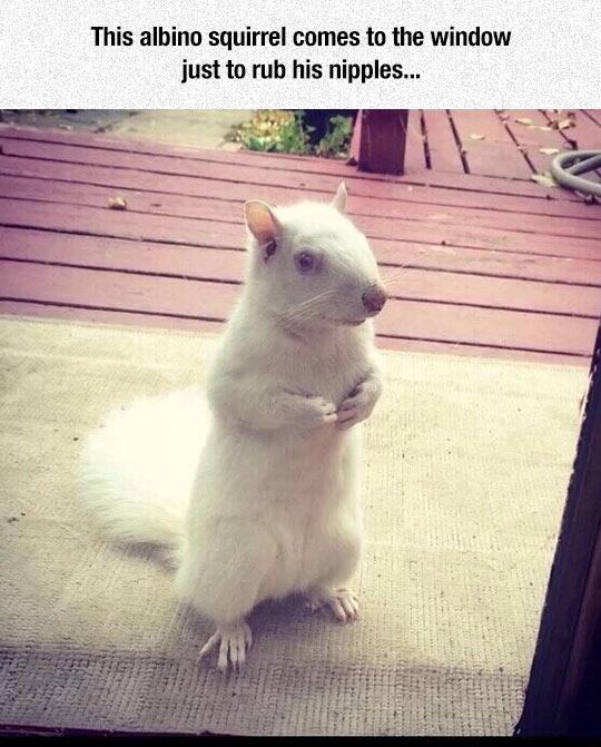 cool-albino-squirrel-window-waiting