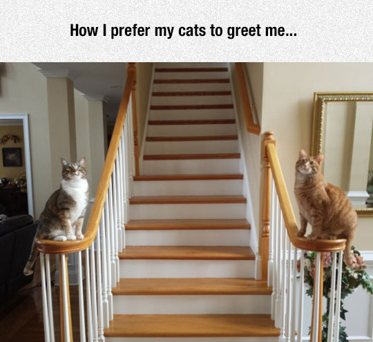 cool-cats-standing-staircase-statues
