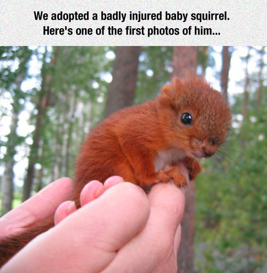 cool-injured-baby-squirrel-tiny-hand