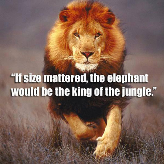 If Size Really Mattered