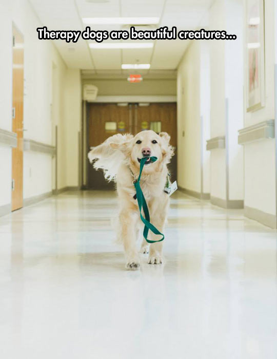 cool-therapy-dog-hospital-leaf