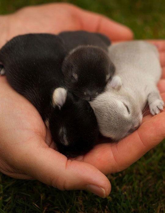 Cutest Nap Ever