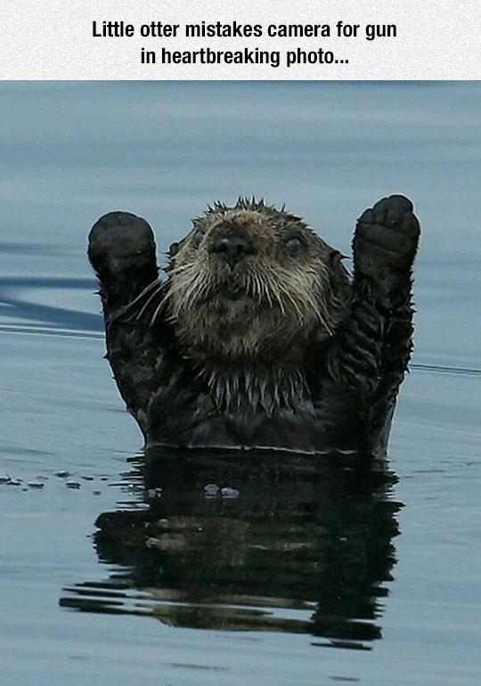 cute-otter-waving-camera