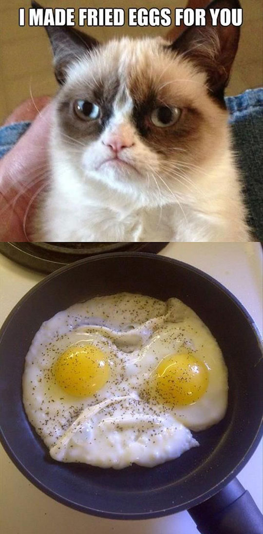 funny-Grumpy-cat-angry-eggs