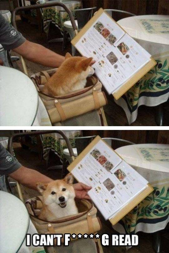 funny-Shiba-Inu-dog-reading-menu