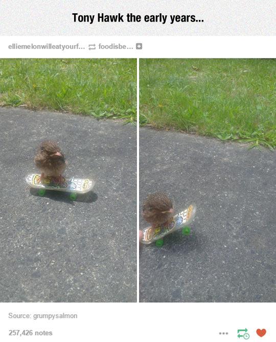 funny-baby-hawk-skater-moves