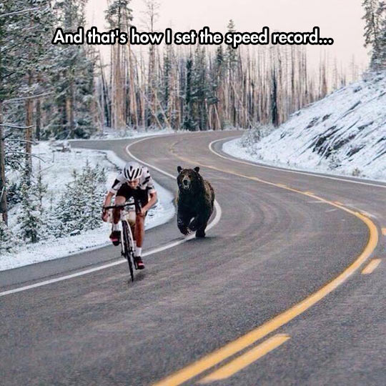 funny-bear-biker-highway-forest