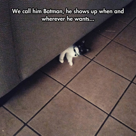funny-cat-Batman-couch-little