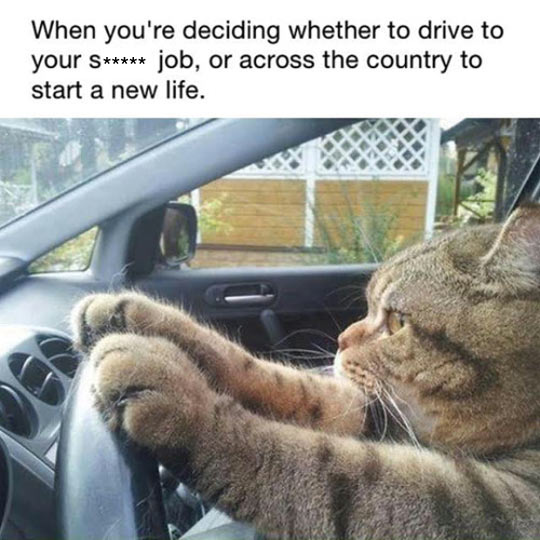funny-cat-driving-car-taking-decision