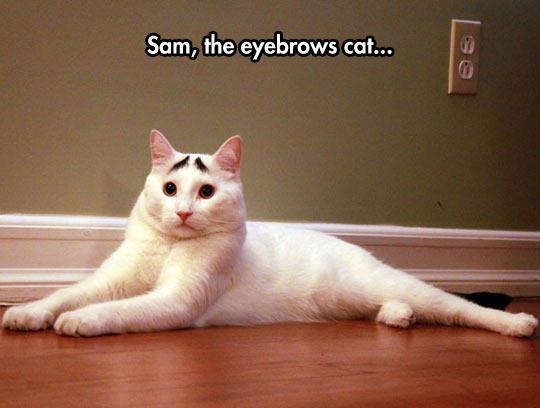 funny-cat-eyebrows-Sam-concerned