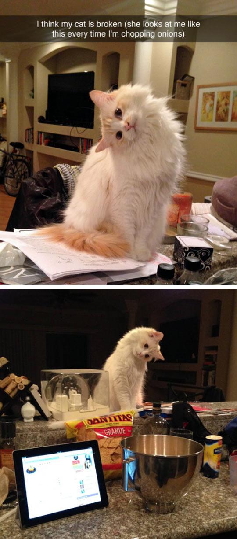The Cat Is Broken