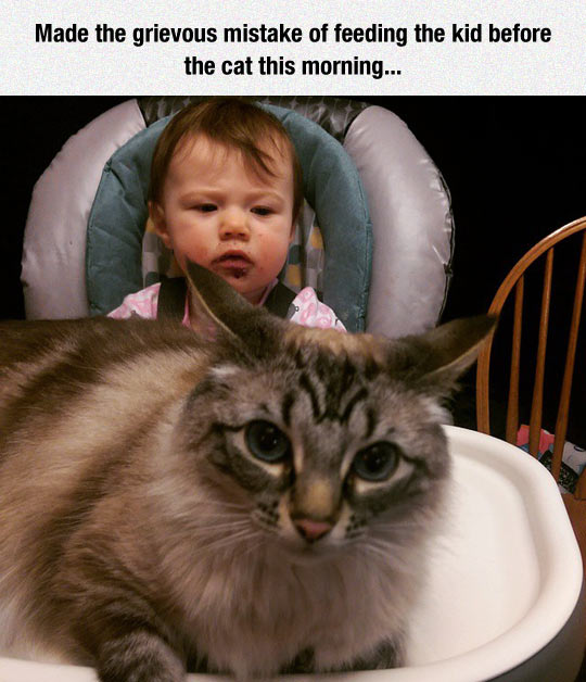 funny-cat-feeding-baby-first