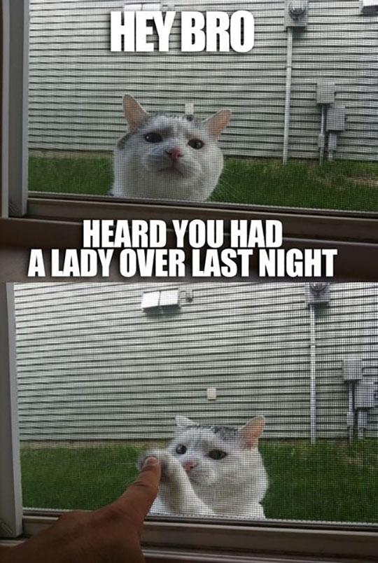 funny-cat-fist-bump-window