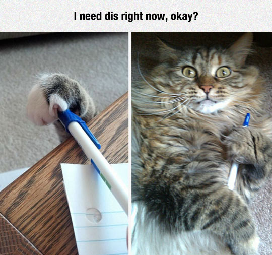 Cat Needs The Pen