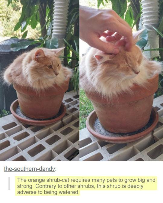 funny-cat-pot-petting-sit