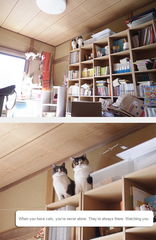 funny-cat-shelf-room-watching