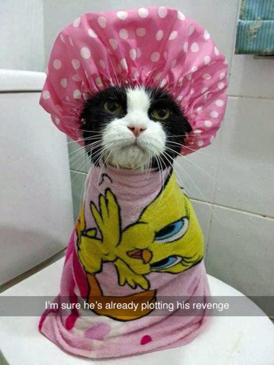 funny-cat-shower-bath-hat