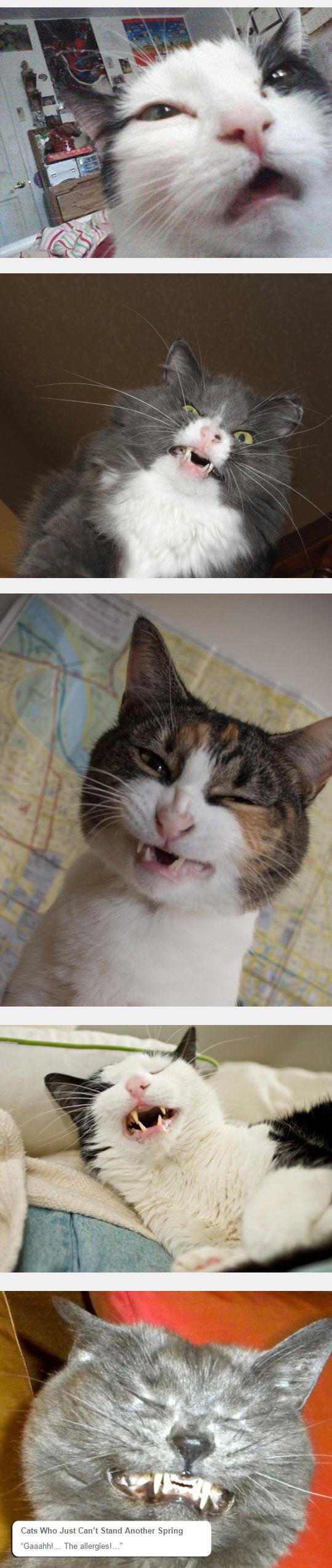 funny-cat-sneeze-face-weird-snout-eyes