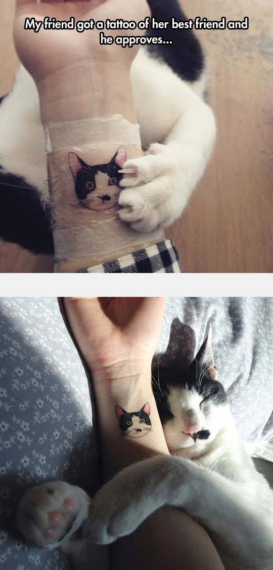 funny-cat-tattoo-hand-pet-face
