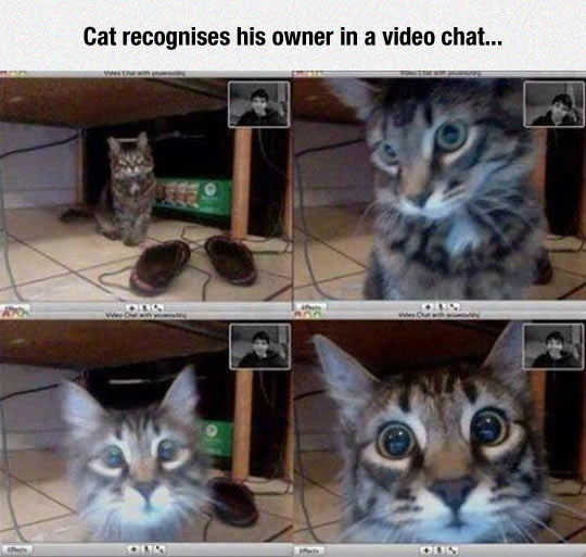 funny-cat-video-monitor-owner
