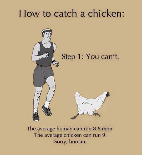 funny-catching-chicken-running-impossible