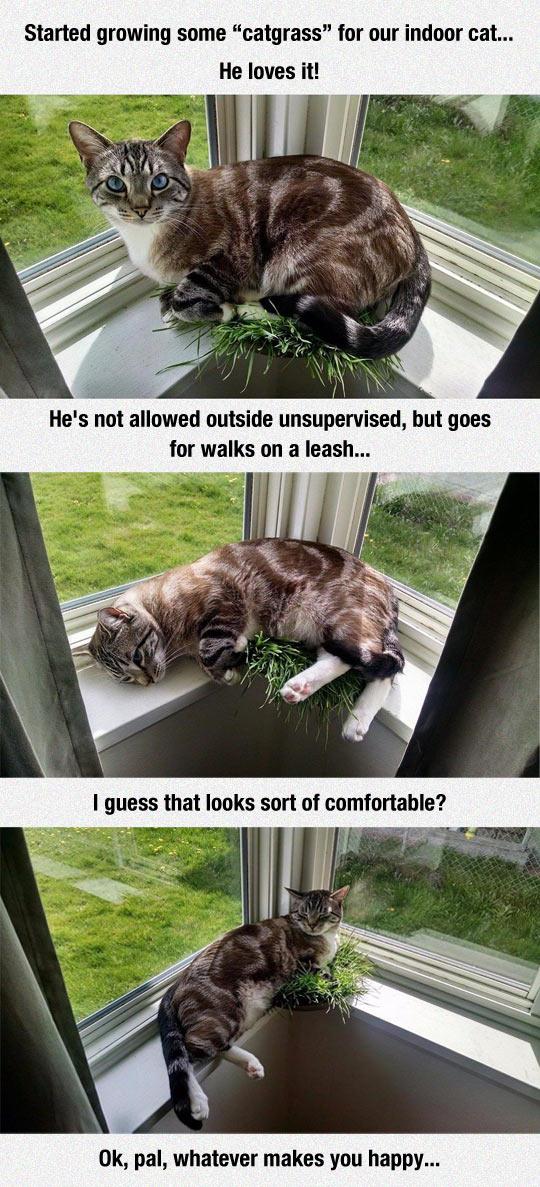 funny-catgrass-pet-window-growing
