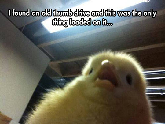 Another Chick Selfie