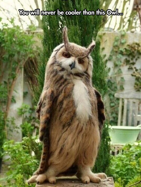 funny-cool-standing-owl