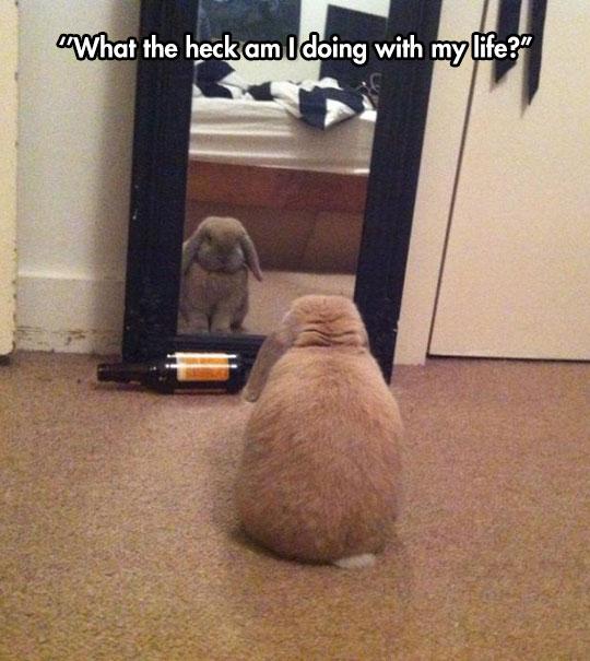 funny-cute-bunny-looking-mirror