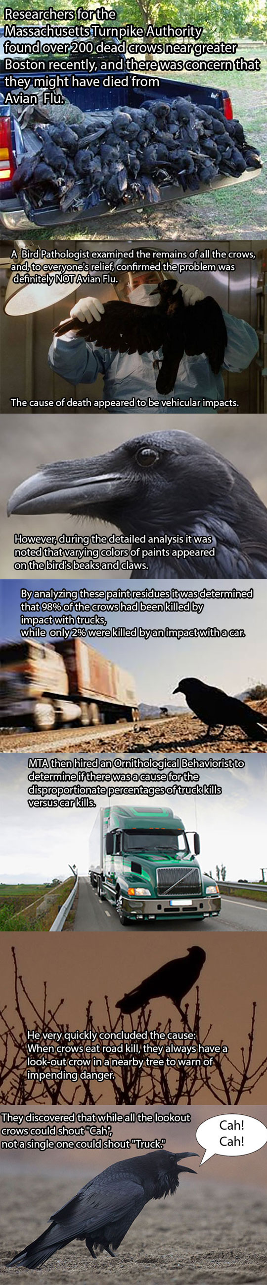 funny-dead-crows-truck-investigation