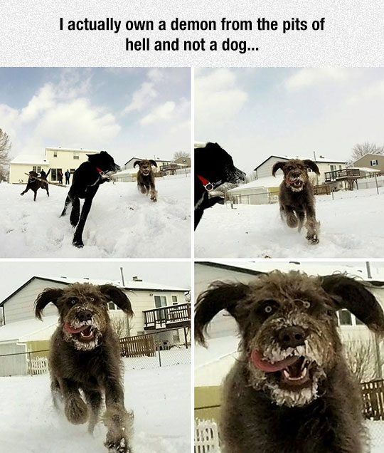 funny-dog-anger-face-snow-playing
