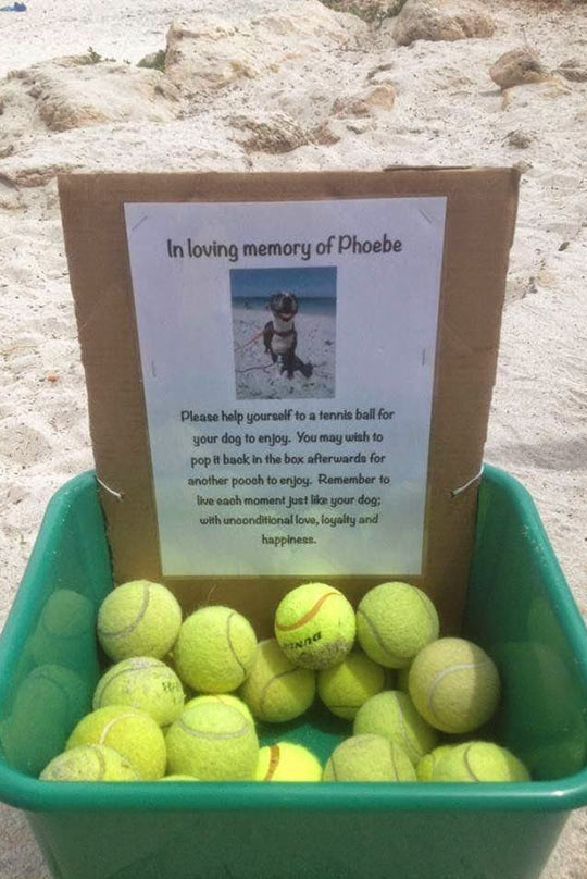 Man Makes A Memorial To Honor His Best Friend