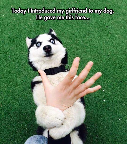 funny-dog-grab-hand-weird-face