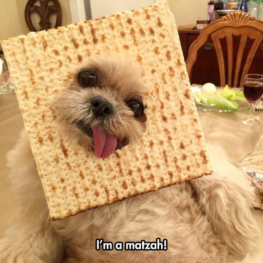 funny-dog-matzah-face-mask