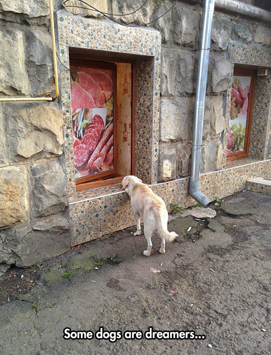 funny-dog-sniffing-window-butcher
