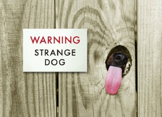 funny-fence-sign-dog-tongue