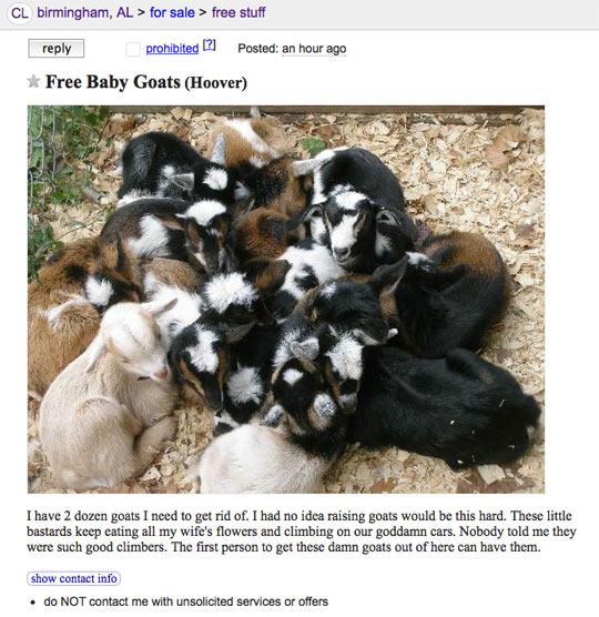 funny-free-baby-goats-craigslist
