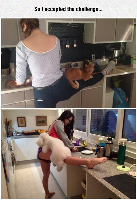 funny-girls-cooking-cat-dog-kitchen