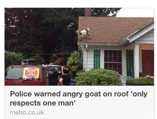 Still My Favorite News Headline